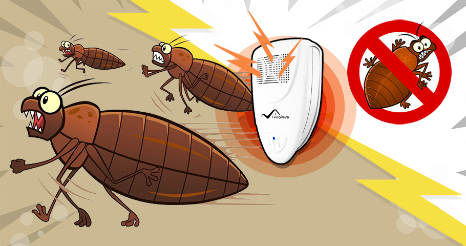 How To Get Rid Of Bed Bugs In Less Than 72 Hours