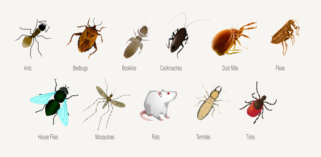 How To Get Rid Of Insects In Less Than 72 Hours